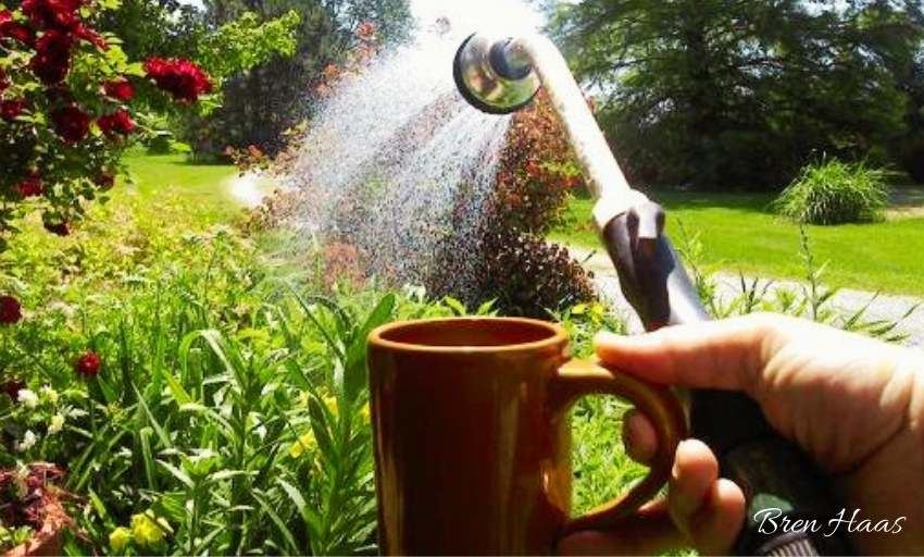 Watering in the Morning with Coffee in Hand