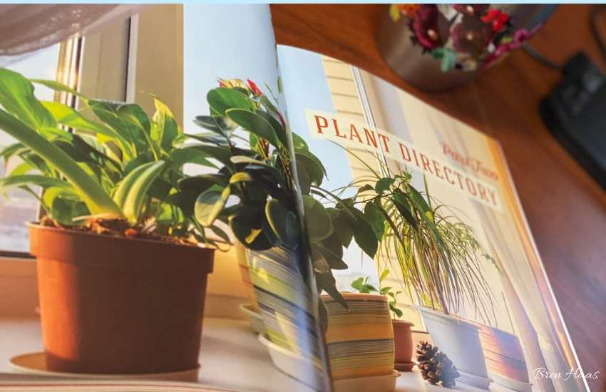 Beautiful Images in Houseplant Handbook