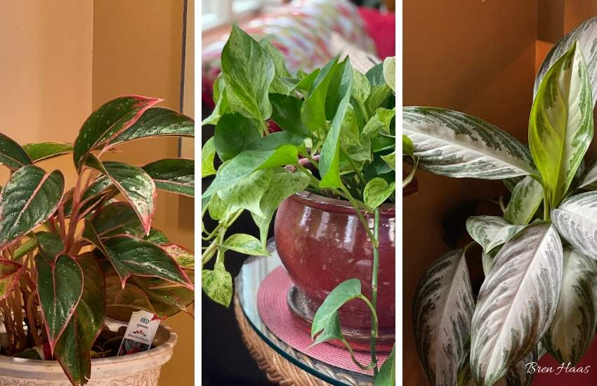 The Best Low Light Houseplants