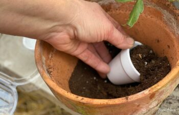 Filling Containers with Soil