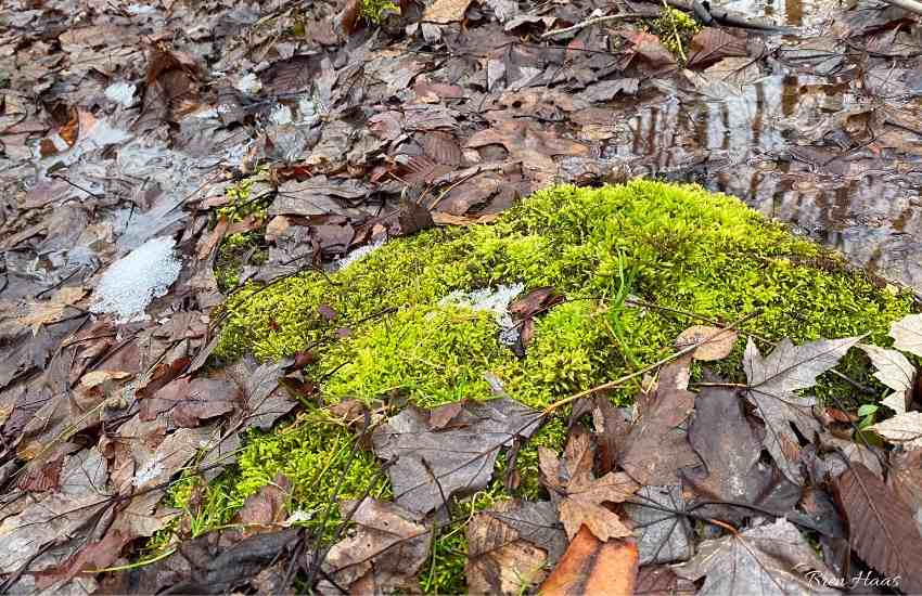 moss growing in woods