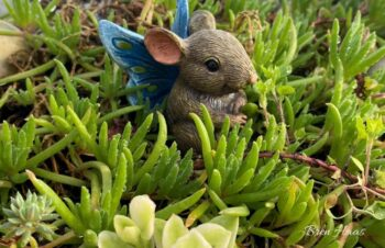 Mouse in Succulents