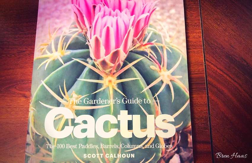 Front Cover of Book Cactus