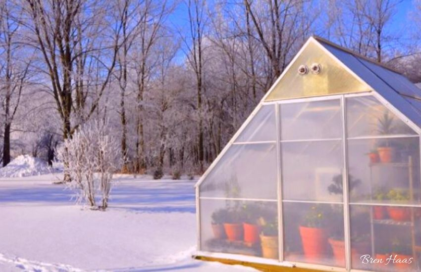 Greenhouse First Winter