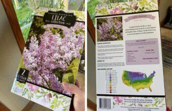 The Lilac Box