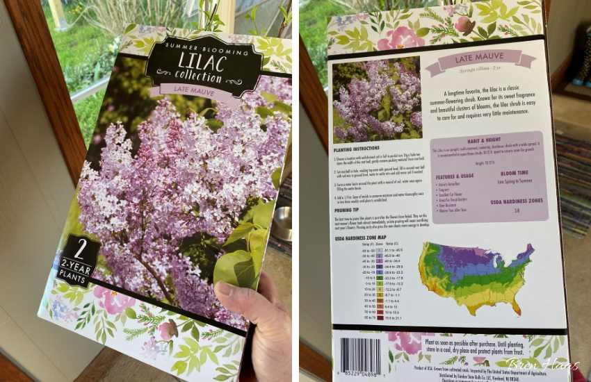The Lilac Box