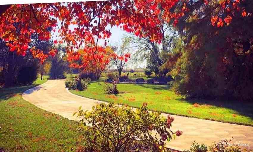Autumn Driveway Border