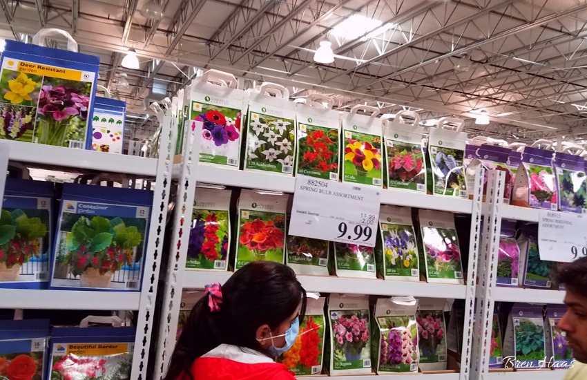 perennials for sale at Costco