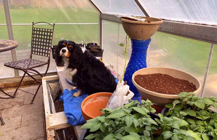 Oliver in the Greenhouse