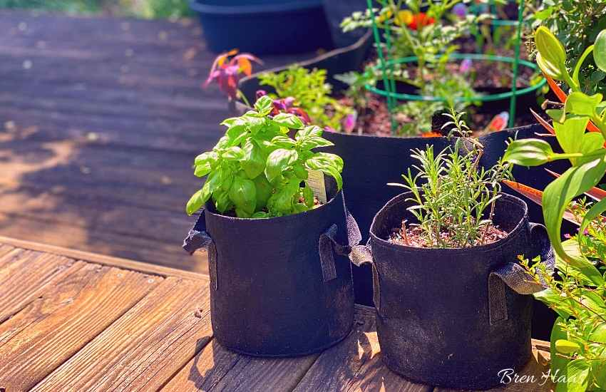 Growing Herbs in Bags