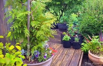 Vlog Feature Step Deck and Landscape
