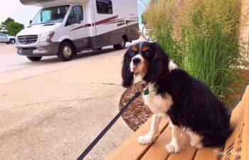 Oliver at Winnebago Visitor Center