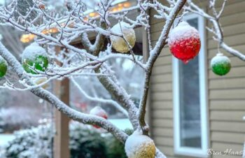 ornaments in the snow