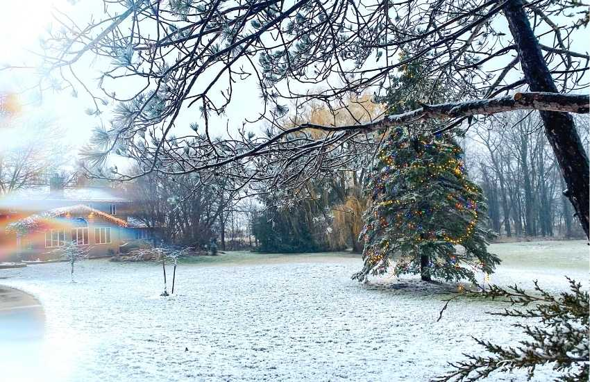 my home garden on snow day