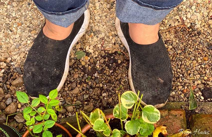 dirty shoes in the garden