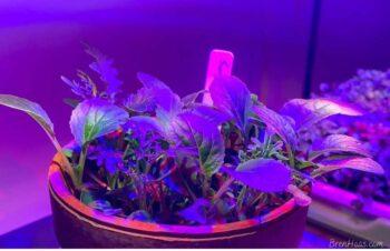 Growing Under Lights