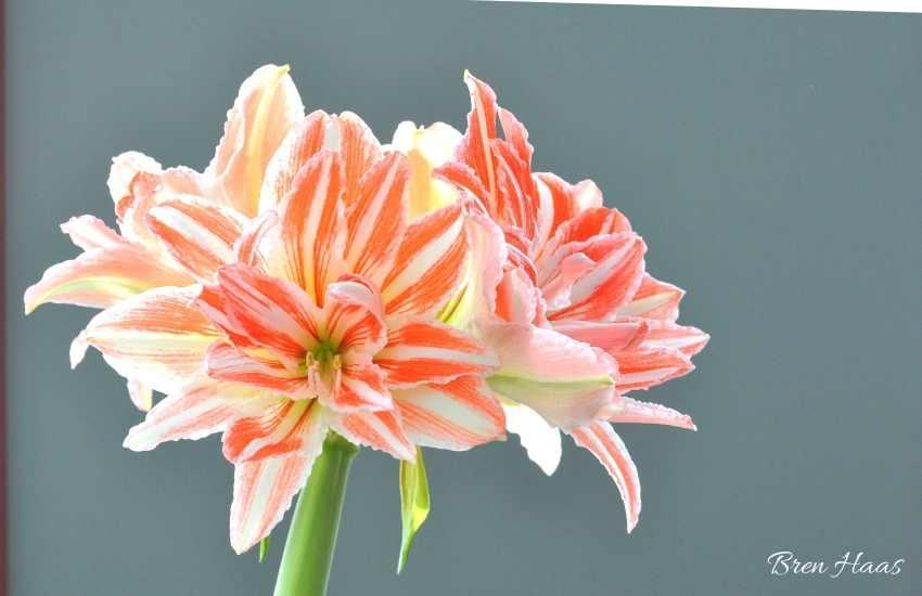Sunroom Blooms