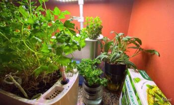 year-round kitchen indoor gardening set up