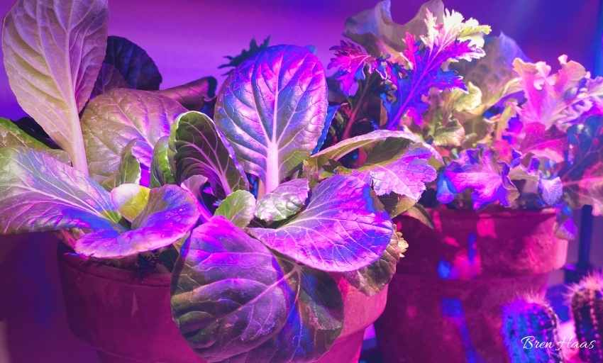Growing Indoors During Winter
