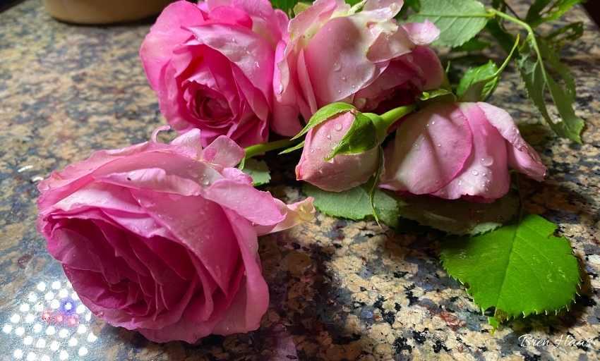 My First Cut Bouquet