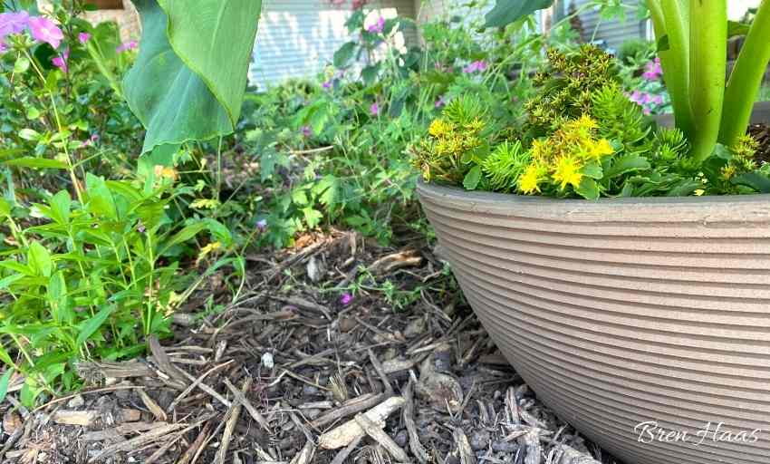 shallow container for bulbs to grow