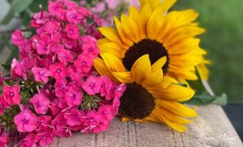 Summer pickings with Sunflowers