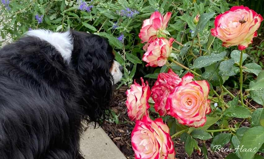 Stop and Smell the Roses