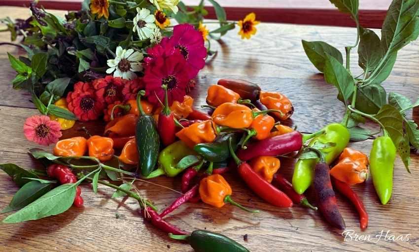 Happy Zinnia Harvest